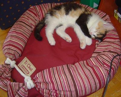 papaye_01-06-2005.jpg