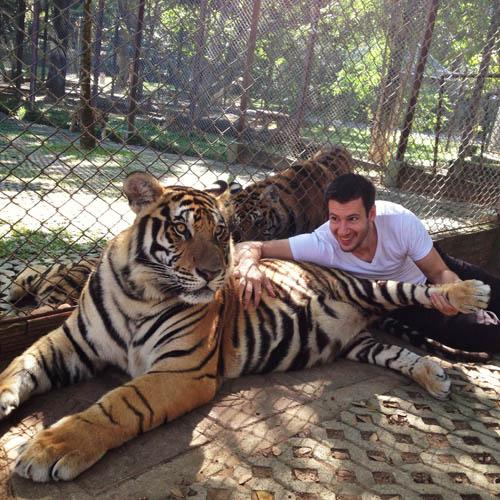 tigres-1